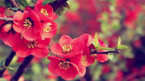 30 beautiful flower wallpapers