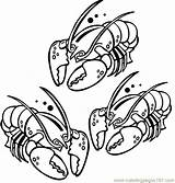Coloring Aragosta Lobster Aragoste Schalentiere Colorare Dibujos Crostacei Dibujo Disegno Ninos Disegni Langostas Imprimir Animales Giocabimbo Coloringpages101 Colorear Animali Tiere sketch template