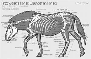 11 Best Horse Anatomy Images On Pinterest