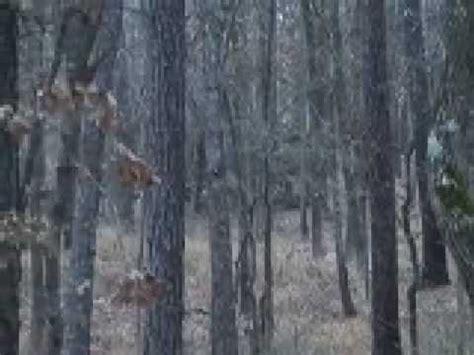davy crockett deer hunting youtube