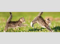 Tierfotografie wie fotografiere ich Haustiere richtig