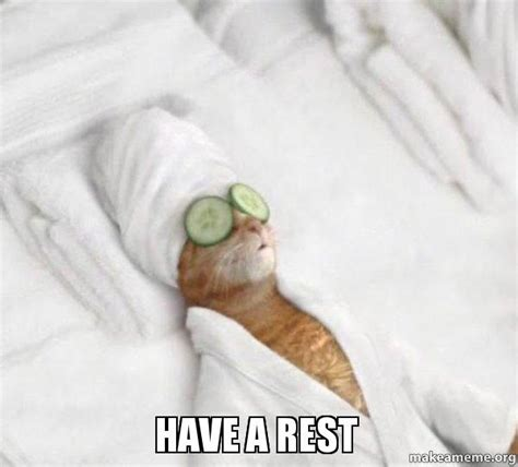 cat box a rest a meme