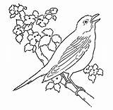Coloring Robin Pages Bird Singing sketch template