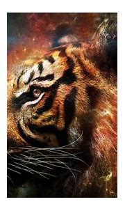 HD Tiger Wallpapers   Full HD Pictures
