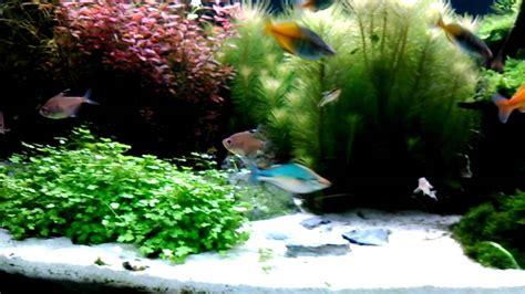 regenbogenfische im 300 liter aquarium