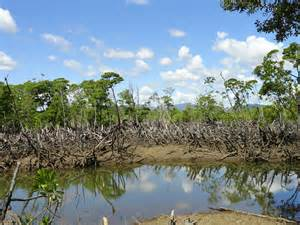 An area of degraded mangrove forest in Ambanja Bay, northwest