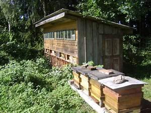 Mittel Gegen Bienen : bienen als sieger gegen beizmittel urfahr umgebung ~ Frokenaadalensverden.com Haus und Dekorationen