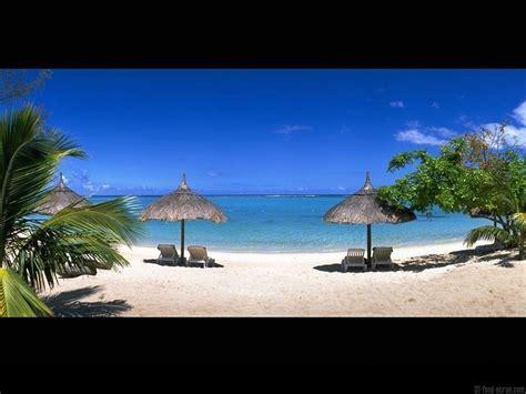 chaise longue plage fond ecran plage palmier parasol chaise longue 1 pictures