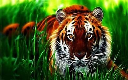 3d Animal Wallpapers Tiger Digital Pc Desktop