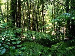Floresta tropical Fauna e Flora Biomas InfoEscola