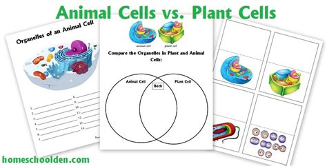 cell unit cell organelles   function animal