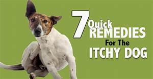 home reme s for itchy pets