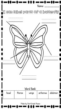 parts   butterfly label activity freebie   grade