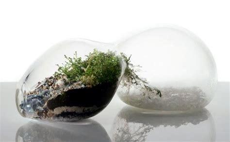 Terrarium designs serve as decorative mini garden in the