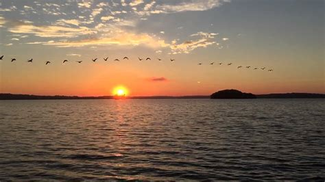 Morning Sunrise With Geese Inflight On Percy Priest Lake