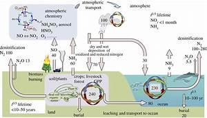The Global Nitrogen Cycle In The Twenty
