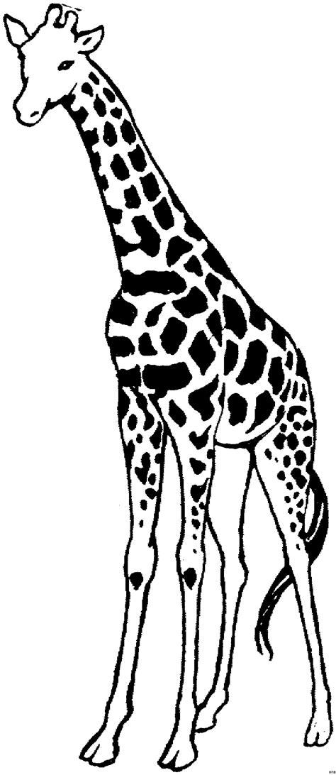 giraffe gross ausmalbild malvorlage tiere