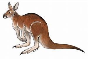 Red Kangaroo by lobocuervo on DeviantArt