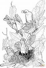 Coloring Robin American Colorare Disegni Vingel Pagine Hood sketch template