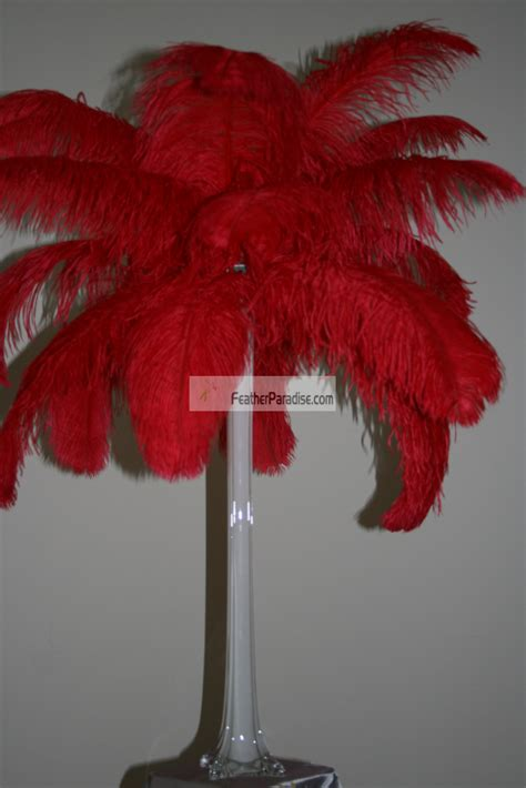feather plume palm tree red ostrich feather plumes