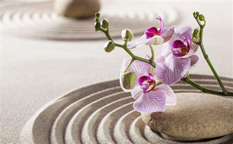 adopta la filosofia zen como estilo decorativo decorar