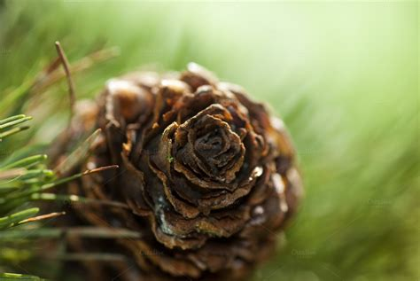 the chew templates pine cones animals pine cone nature photos on creative market