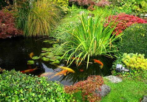 Fische In Teich Einsetzen  Obi Ratgeber
