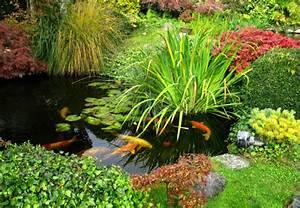 Teich Im Garten : fische in teich einsetzen obi ratgeber ~ Lizthompson.info Haus und Dekorationen