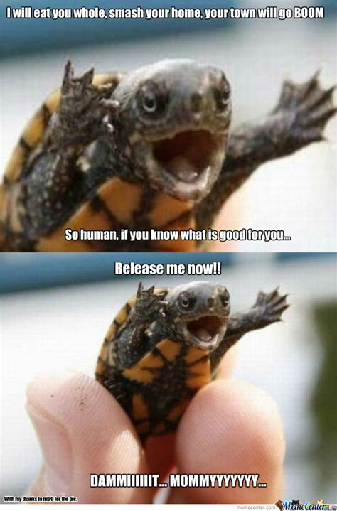 Tortoise Meme - mad tortoise by symanovitch meme center