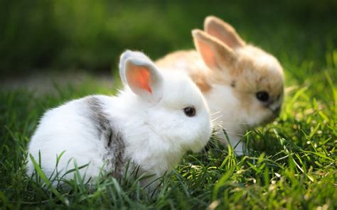 Lovely Animals Wallpapers - lovely baby bunny animal wallpaper hd wallpaper animal