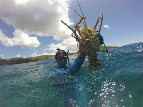 island adventure package st thomas scuba diving jj divers