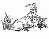 Goat Mountain Coloring Line Eating Grass Pages Drawing Getdrawings Colorluna sketch template