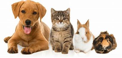Pets Vet Veterinarian Center Pet Care Exotic