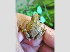 Spring Peepers Environment