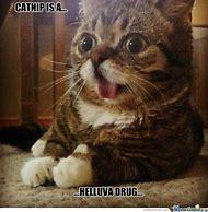 Most Funny Cat Memes