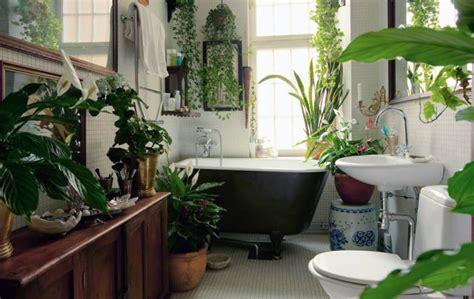 apartment plants window sneak peek best of indoor plants