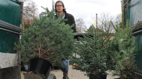 weihnachtsbaum mieten statt wegwerfen so funktioniert das