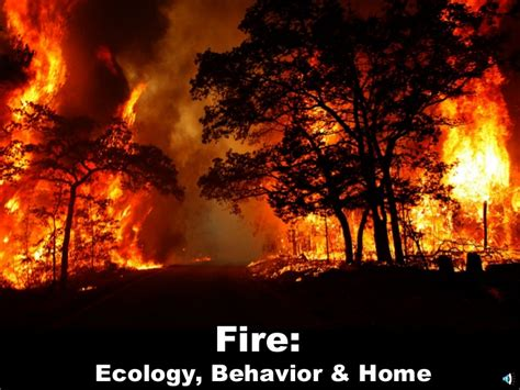 fire ecology notes