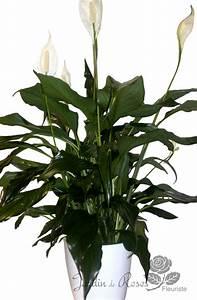 Fleur De Lys Plante : lys de paix livraison de fleurs st hubert la prairie ~ Melissatoandfro.com Idées de Décoration