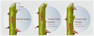 Comment Tailler Les Rosiers : tailler un rosier jardinage ~ Nature-et-papiers.com Idées de Décoration