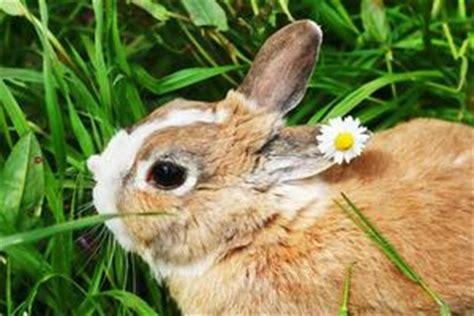 Cosa Mettere Nella Gabbia Coniglio by Come Fare Facile Giocattoli Coniglio Russelmobley