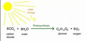 Bioenergetics  Photosynthesis And Cellular Respiration
