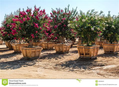 tree nurseries boxed trees nursery stock image image of baskets shape 32939591