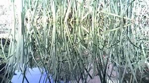 Graskarpfen Im Gartenteich : gartenteich mit goldfischen und grasskarpfen teil1 youtube ~ Frokenaadalensverden.com Haus und Dekorationen