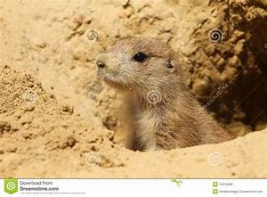 Prairie Dog Burrows