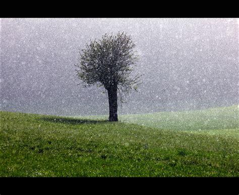 rasen kalken regen hintergrundbilder sonnenlicht wald wasser gras regen