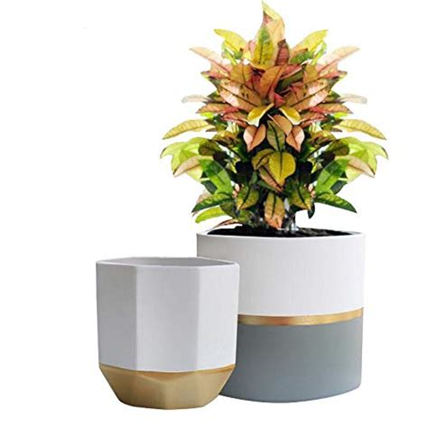 Large Indoor Planters by Large Indoor Planters