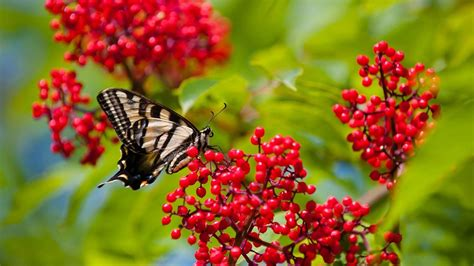 We have 65+ amazing background pictures carefully picked by our community. Beautiful Butterflies and Flowers Wallpapers (56+ images)
