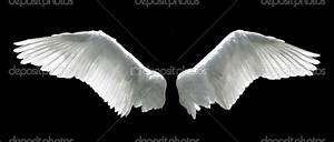 White Angel Wings Background