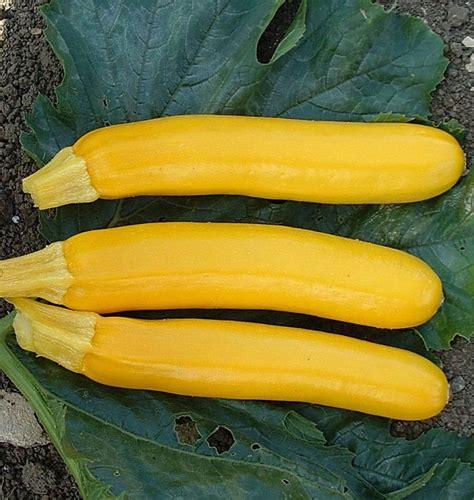 Goldy Zucchini Seeds - West Coast Seeds